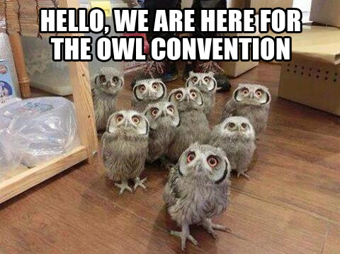 owlconvention